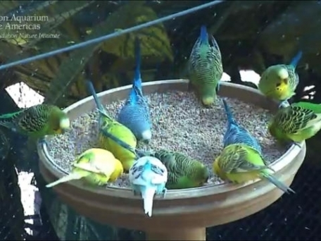 Animal Cams - Watch real live wildlife