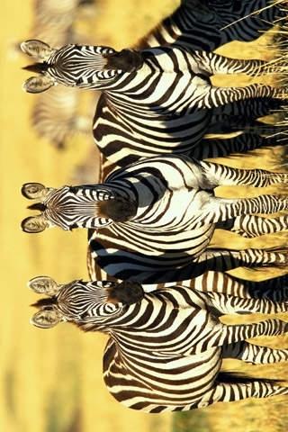 Animal Wallpapers Top