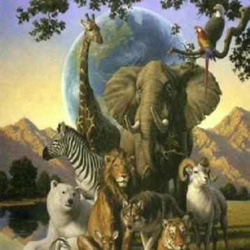 Animals sound+