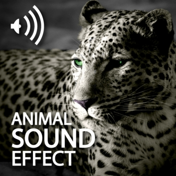 Animals Sound Effect Pro HD