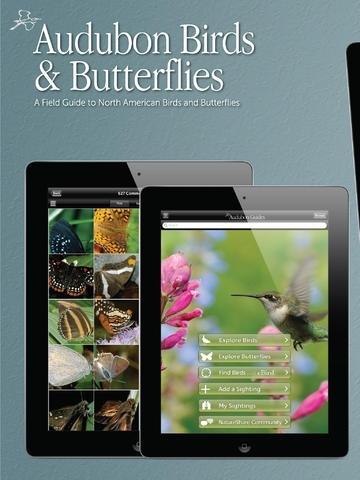Audubon Birds and Butterflies - A Field Guide to North American Birds and Butterflies