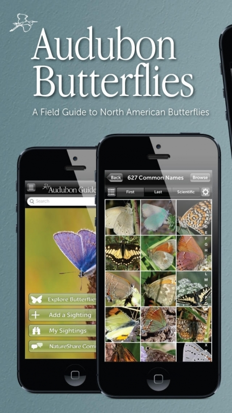 Audubon Butterflies - A Field Guide to North American Butterflies