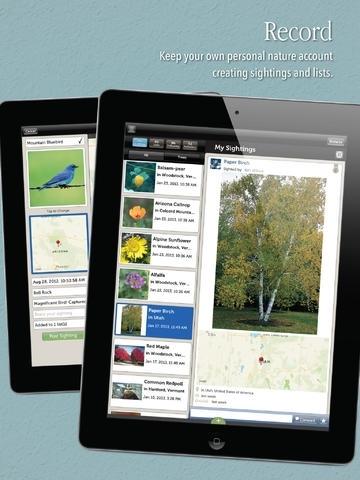Audubon Guides Box Set - Birds, Tree, Wildflowers &  Mammals