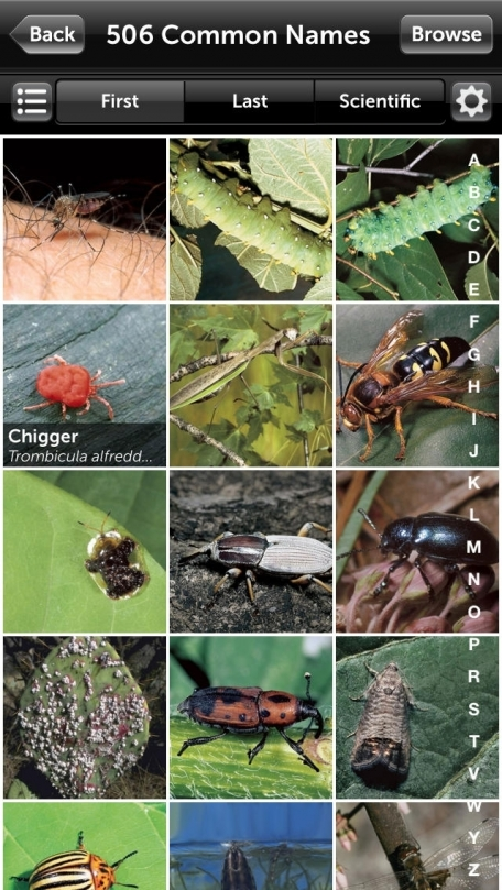 Audubon Insects and Spiders – A Field Guide to North American Insects and Spiders