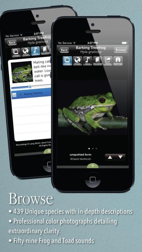 Audubon Reptiles and Amphibians – A Field Guide to North American Reptiles and Amphibians
