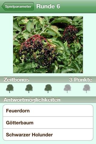 Baumführer (Nature-Lexicon)