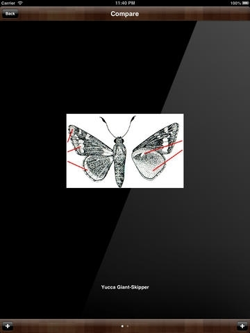 Biology of Butterfly
