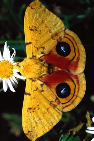 Bird Butterfly Wallpaper