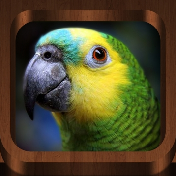 Bird Calls : 4500+ Bird Sounds, Bird Songs, Bird Identification & Bird Guide - Free