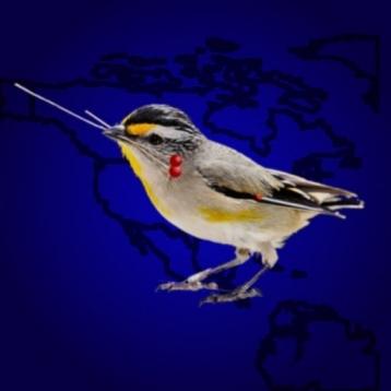 Bird Spot