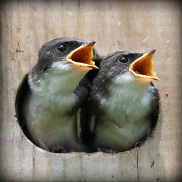 Birds Quiz & Puzzles