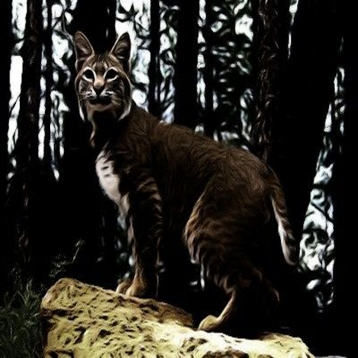 Bobcat \'s - Sounds, Ringtones, Alerts from the Mountain Top