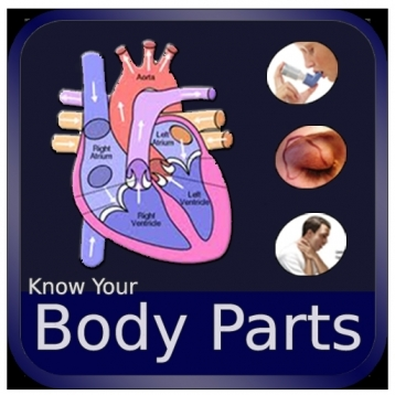 Body Parts and Functions