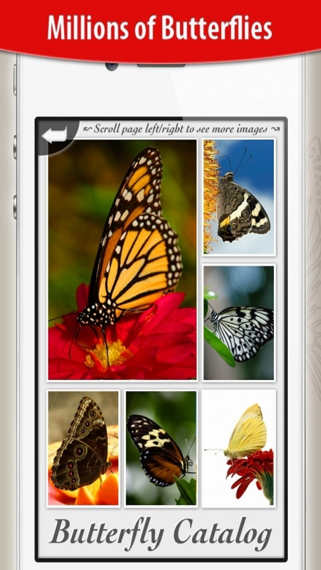 Butterfly Collection HD+