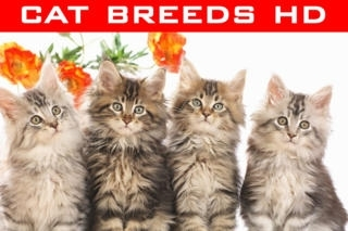 Cat Breeds Wallpapers HD+