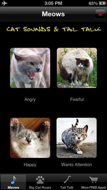 Cat Sounds & Tail Talk