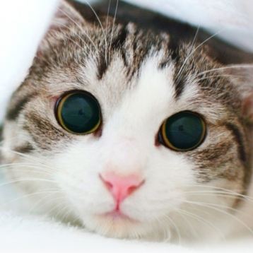 ★★ Cat Treats ★★