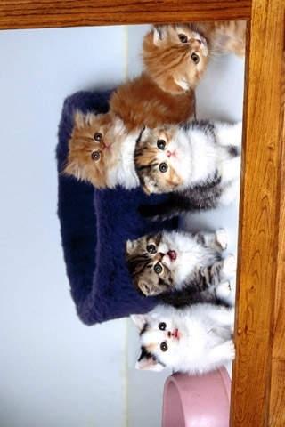Cat Wallpaper Top