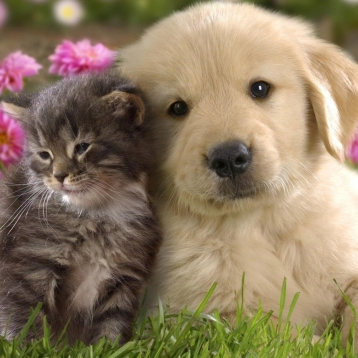 Cats & Dogs Breeds