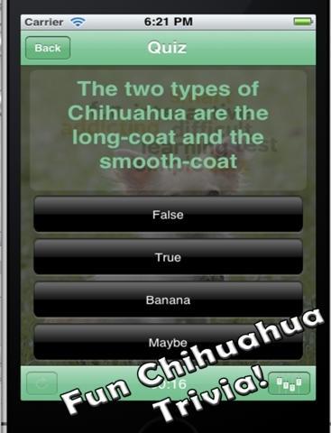 Chihuahua+