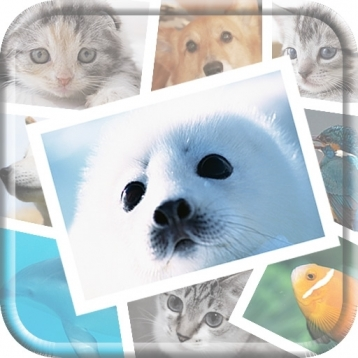 Cute Animal and Pet Photo Collections