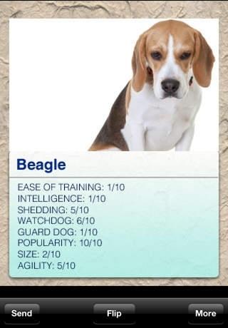Dog Breeds Pro