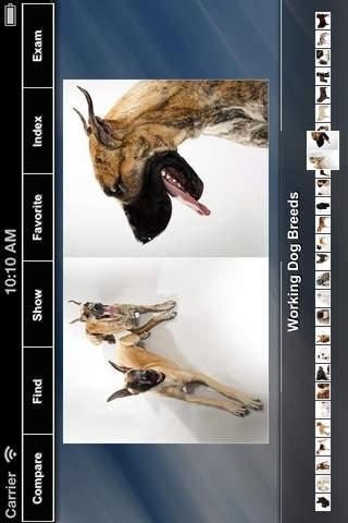 Dog Pocketbook
