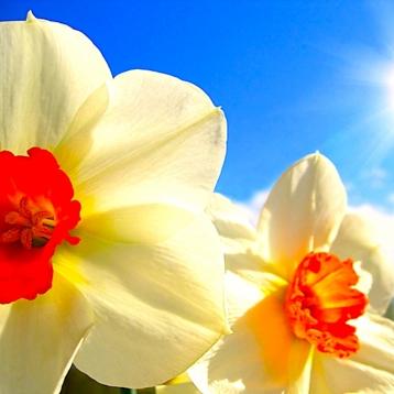 Flowers in HD