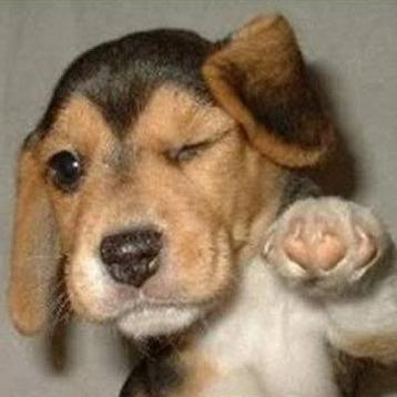 Funny Dog Pics!