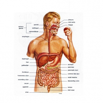 Gastroenterology Comprehensive Review Course Board Review Gastroenterology and Hepatology