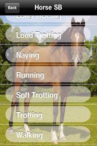 Horse Sounds!