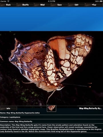 Insect Mania HD