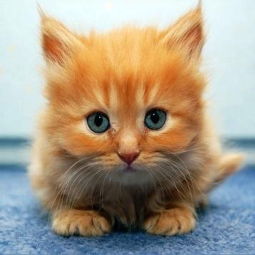 Kitten & Cat Puzzles