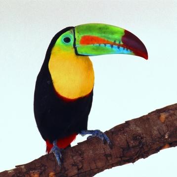 Matching Pairs (Amazon Tropical Rainforest)