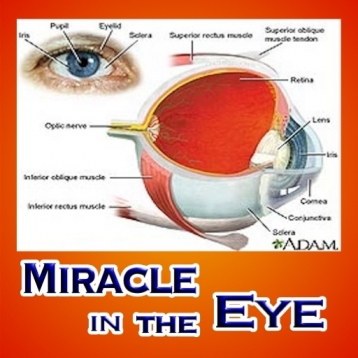 MIRACLE IN THE EYE : Perfect Design , The Eyed and Technology , Animal and Insect Eyes ,The eye\'s focusing mechanism