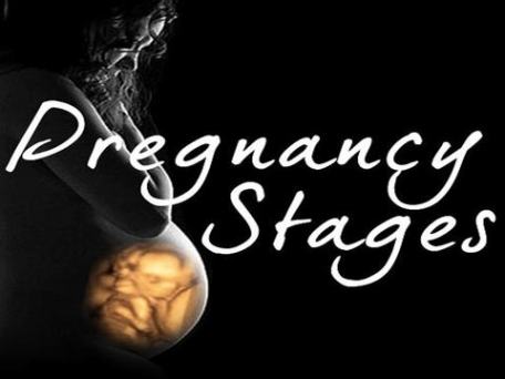 Pregnancy Stages App