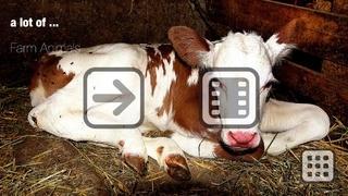 100 Farm Animals