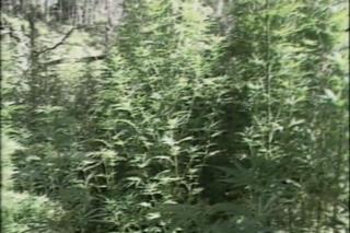 The Hemp Revolution-appMovie on the History and Uses of Marijuana