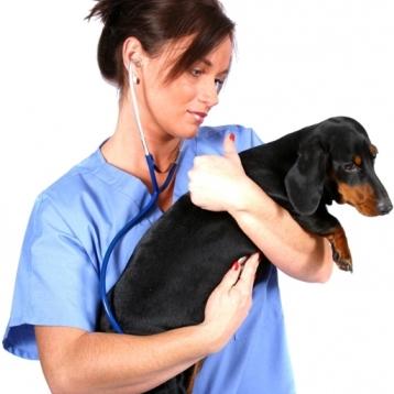 Veterinary Exam