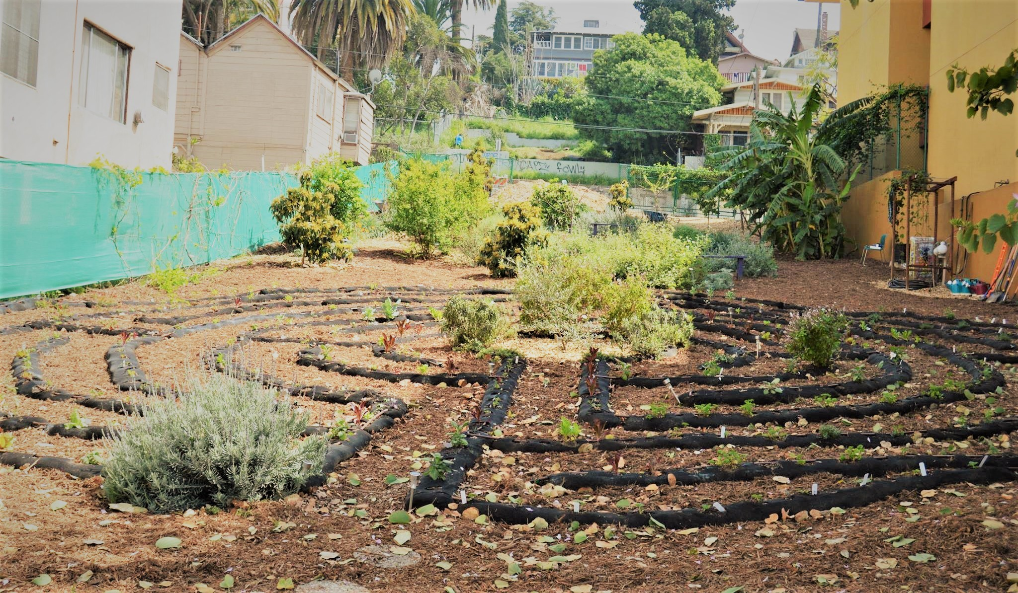 Living Labyrinth   Seeds of Hope on