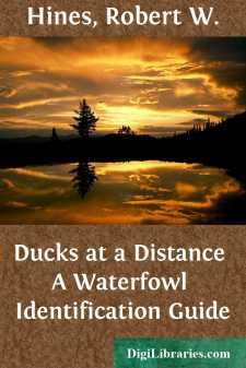 Ducks at a Distance