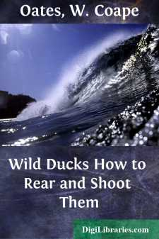 Wild Ducks