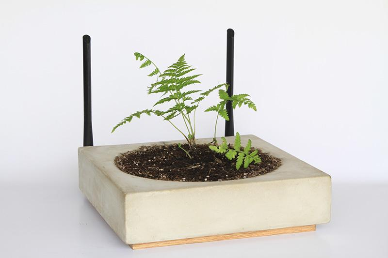 Grow a plant on your router digital trends for Home router architecture