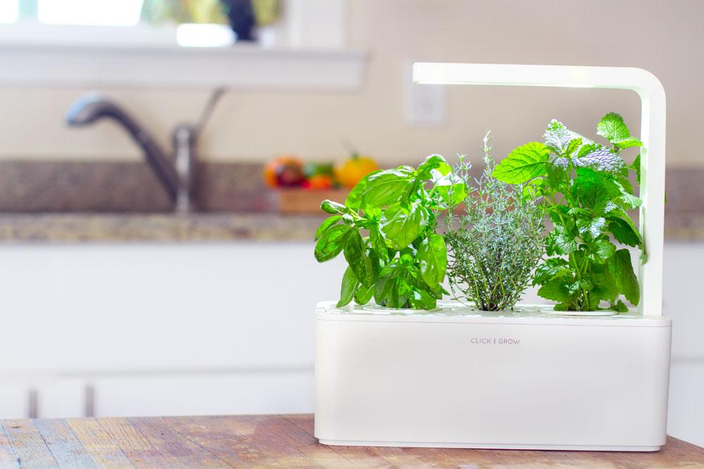 The New Click Grow Smart Herb Garden Launches Worldwide
