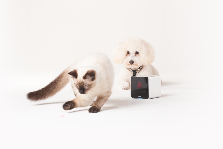Best Buy Dog Camera