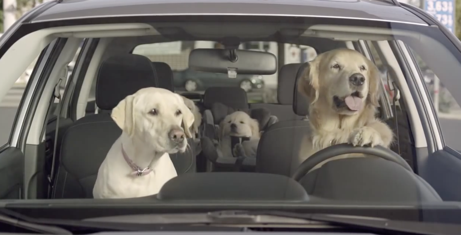 tennesseans can now smash a car window legally if they see a suffering pet inside