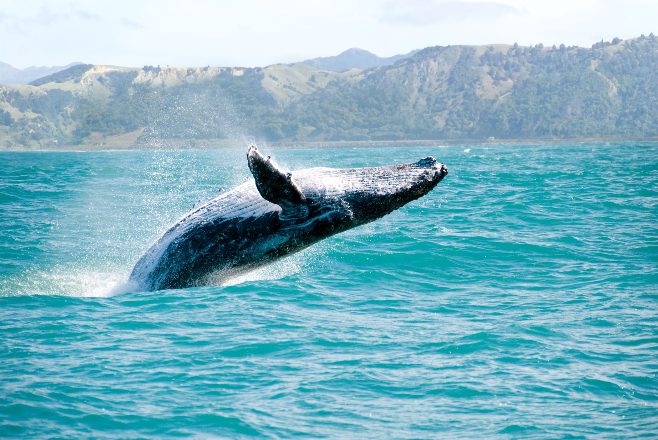 new acoustic mapping system can instantly find all whales in a