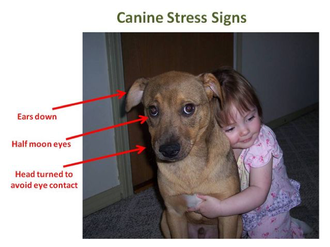 The Next Time You Want To Hug Your Dog Just Don T