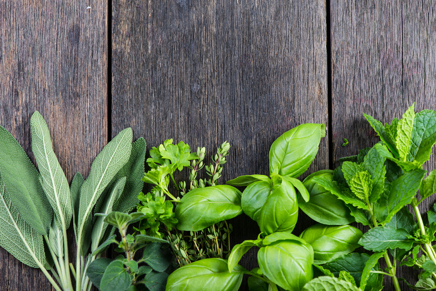 How to grow an indoor herb garden digital trends - Medicinal herbs harvest august dry store ...