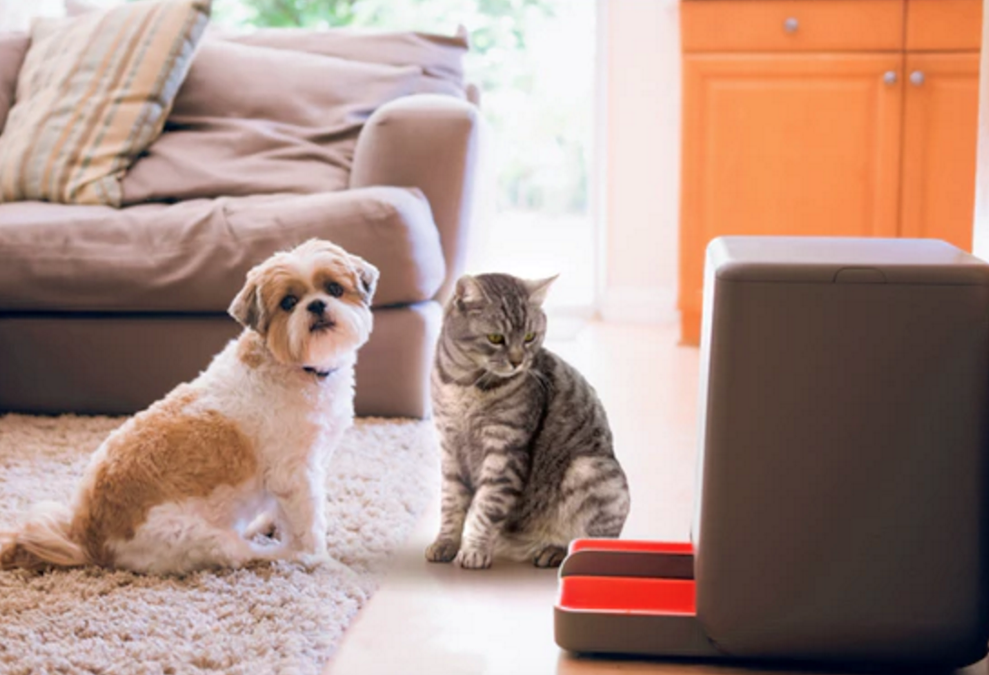 Automatic pet feeder will order food from Amazon when youre